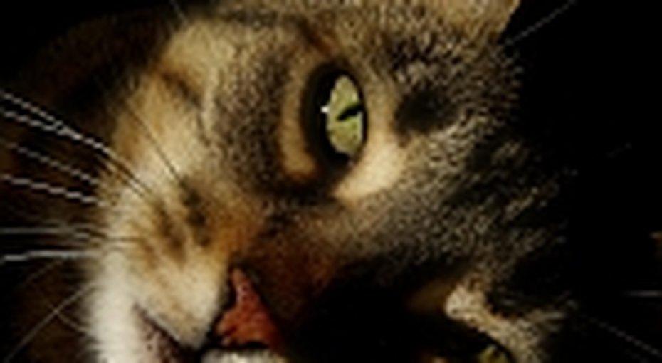 У кошек все подконтролем