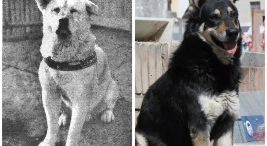 Хатико иеще 5 домашних животных, которые хранили верность хозяину после его смерти