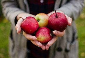 Яблочный Спас: 5 рецептов необычной выпечки из яблок