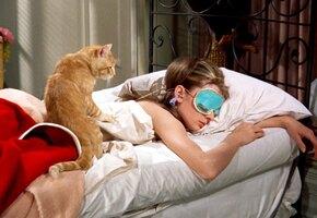 Невероятная жизнь рыжего кота из «Завтрака у Тиффани»: тот, кого прогнала Холли