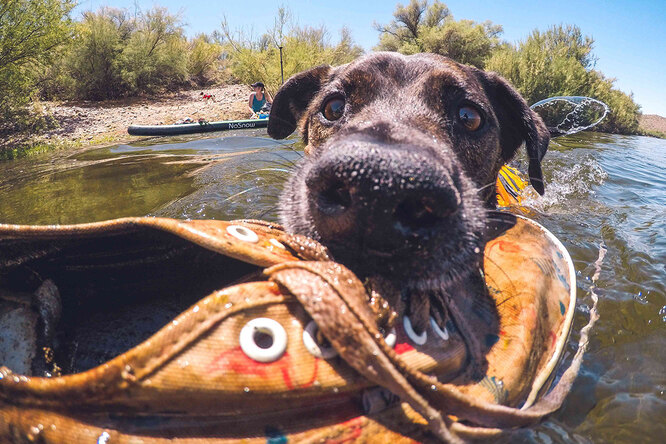 Приютский пес спасает планету, собирая пластик — иего этому никто неучил