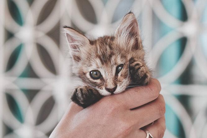 Кто сказал мяу: ретриверы ихаски ввосторге открохотных котят