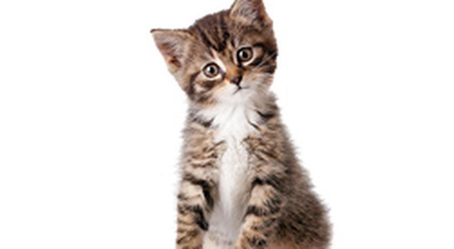 Хочу котенка!
