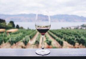 Красное вино: польза и вред для здоровья человека
