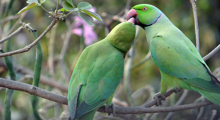 Попугаи устроили «человеческую» беседу. Все успели: ипоругаться, ипомириться!