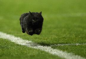 Ей заплатили? Кошка смешно бросилась под ноги бегунам на финише 100-метровки