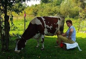 Из Москвы в деревню: бросить работу и стать счастливым фермером и приёмной мамой