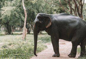 Певица Шер встретилась с самым одиноким слоном в мире