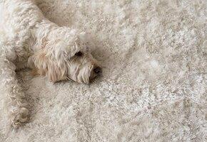 Как сделать пояс из собачьей шерсти своими руками?