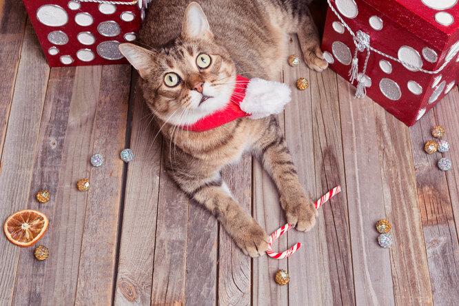 «Как завернуть подарок, если утебя есть кошка»