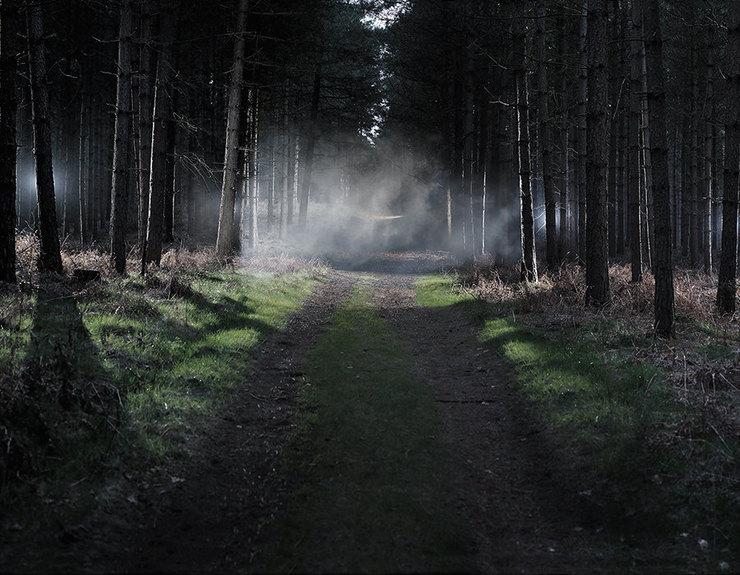 туман, лес, темнота, страх