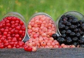 Смородина красная и черная: 13 рецептов десерта и напитков прямо с куста