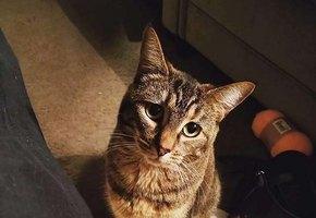 Кошка навещает бывшего хозяина в доме престарелых