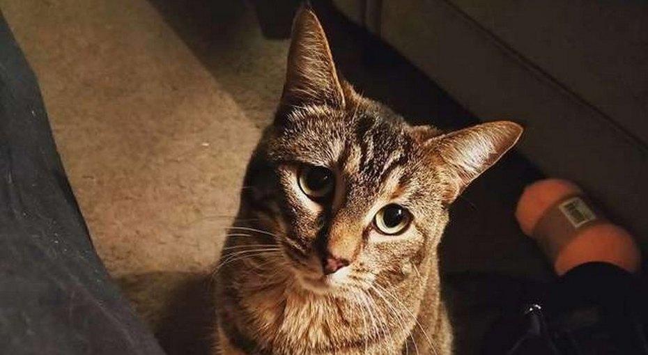 Кошка навещает бывшего хозяина вдоме престарелых