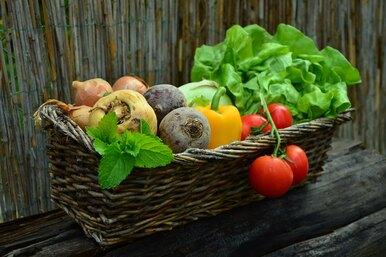 Полезная дача: как сад иогород влияют нанаше здоровье