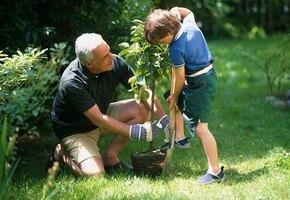 Москвичи смогут высадить именное дерево в честь своего ребенка