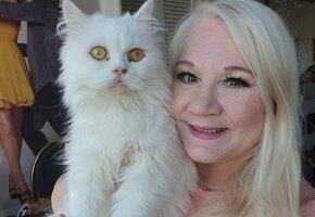 Пара преодолела 6 тысяч километров, чтобы спасти кота, облитого ядовитой краской
