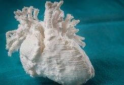 Ученые напечатали на 3D-принтере живое человеческое сердце