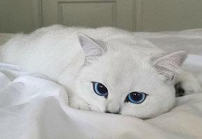 Кот с ангельскими глазами. Не фотошоп