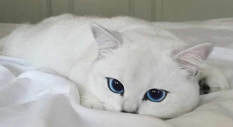 Кот сангельскими глазами. Нефотошоп