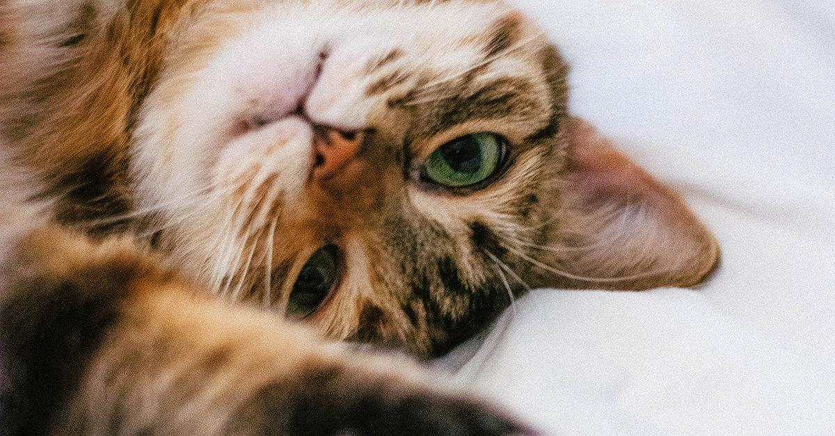 Коты без аллергии