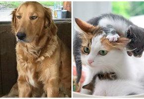 Собаки и кошки-мамы, которыми можно иллюстрировать «радость материнства»