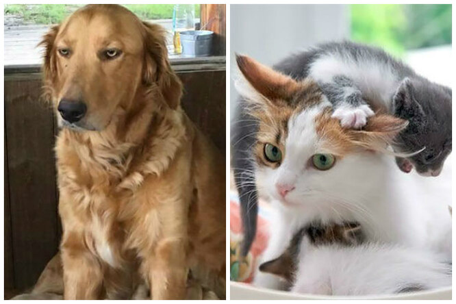 Собаки икошки-мамы, которыми можно иллюстрировать «радость материнства»