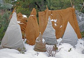 Как подготовить многолетние цветы к зиме: правила  обрезки и укрытия
