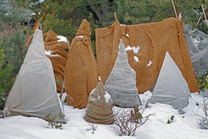 Как подготовить многолетние цветы кзиме: правила  обрезки иукрытия