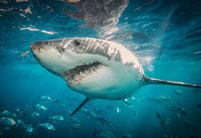 Недюжинная сила: на видео попали редкие кадры атаки акулы