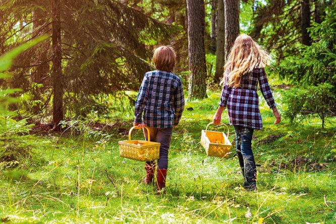 Надо знать: как непотеряться влесу детям ивзрослым