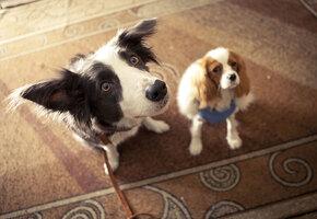 Лохматое кино: добрые фильмы о животных, которые можно посмотреть всей семьей
