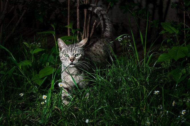25 оттенков серого — почему кошки лучше нас видят ночью