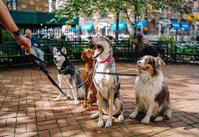 Собакам было некуда пойти, когда хозяева угодили в ДТП. Их приютил незнакомец
