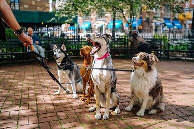 Собакам было некуда пойти, когда хозяева угодили вДТП. Их приютил незнакомец