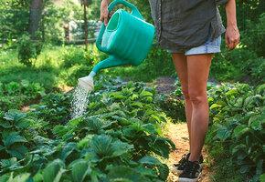 Полив в жару: ошибки, которые могут испортить урожай