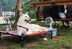 Охлаждающий коврик, дорожная бутылочка и другие лайфхаки для животных в жару