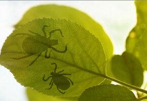 Натуральные пестициды для вашего сада. Никакой химии!
