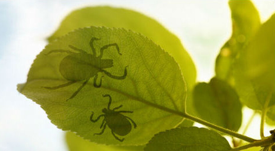 Натуральные пестициды длявашего сада. Никакой химии!