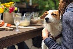До ипосле: 10 фотографий собак, которые доказывают, что любовь творит чудеса