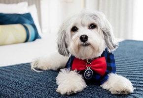 Гостям этого отеля предлагается дополнительная услуга: собака в номер!