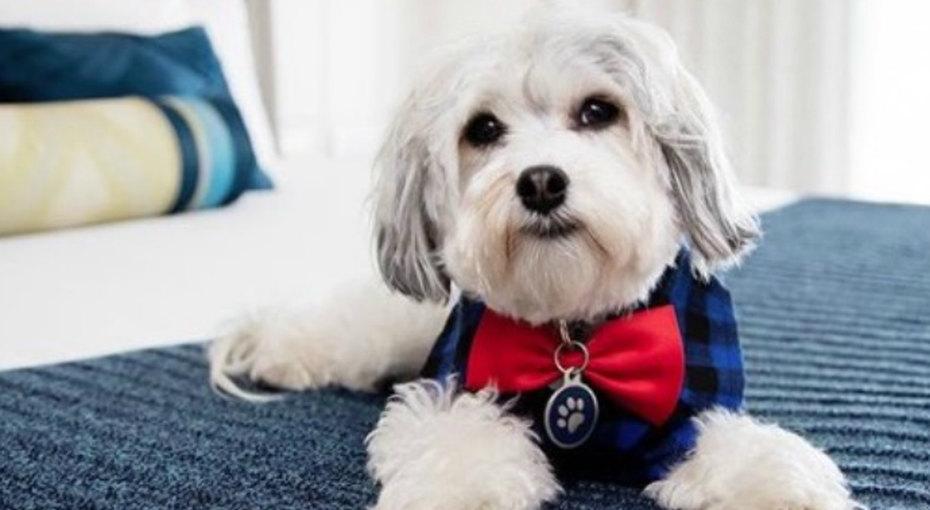 Гостям этого отеля предлагается дополнительная услуга: собака вномер!