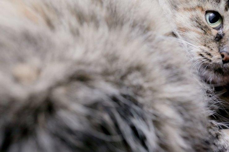 В мини-приюте живут как «домашние» коты, хозяева которых уехали вотпуск, так икоты, которые ищут свой постоянный дом Фото: Анна Иванцова дляТД