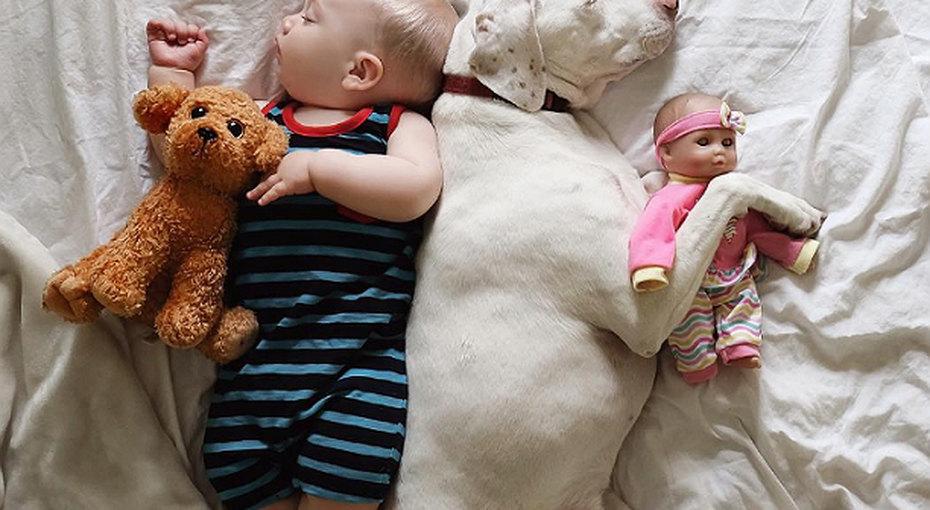 Любовь додрожи. Собака имладенец проводят вместе все время... даже во сне