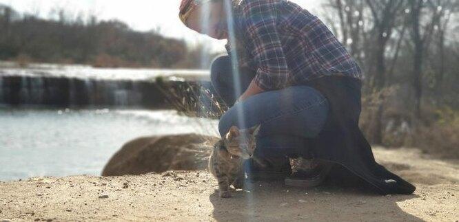 кошка на шлейке, кошка эйми, кошка путешественница