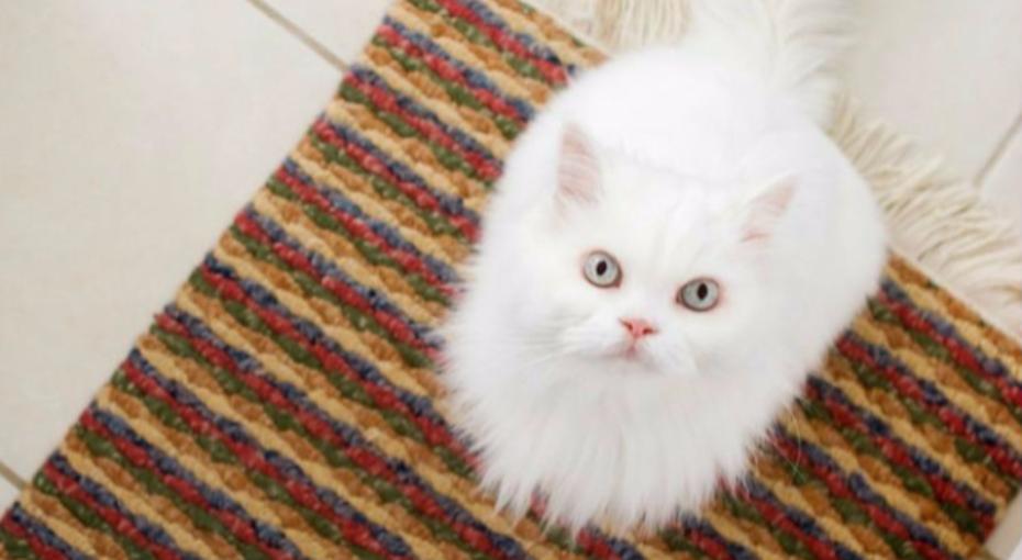 Как удалить следы кошачей мести изквартиры