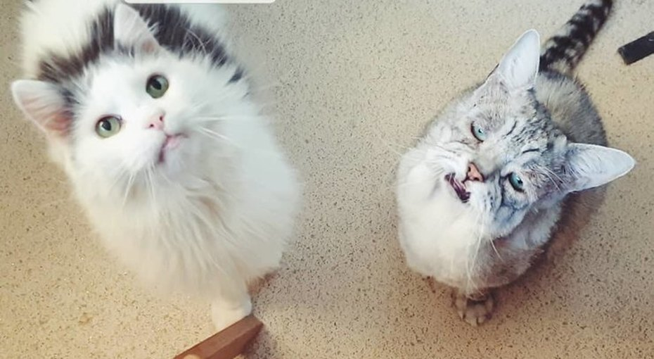 «Самый уродливый кот»: как человеческая любовь изменила жизнь кота изприюта