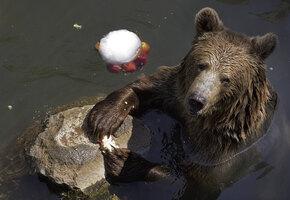 Почему медведь спит зимой?