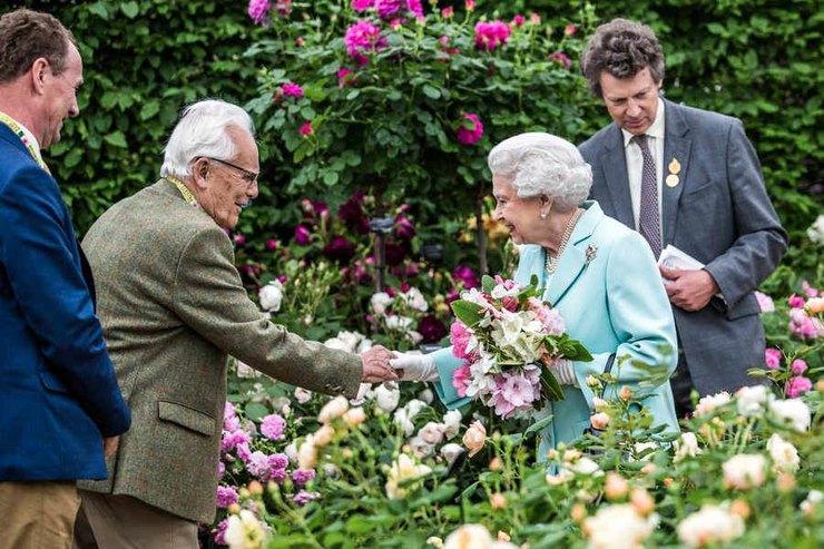 Королева цветов: чем хороши длявашего сада знаменитые английские розы?