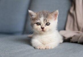 Точно такая же: учёные объявили о втором успешном клонировании кошки